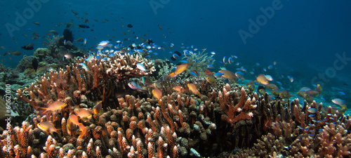 Photo of coral colony #60621010