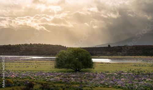 Fotografia  Landscape of New Zealand