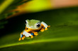 Colorful jungle theme with frog, vivid colors
