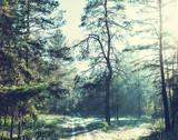 Autumn forest - 60626422