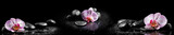 Fototapeta Kamienie - Horizontal panorama with pink orchids and zen stones on black ba