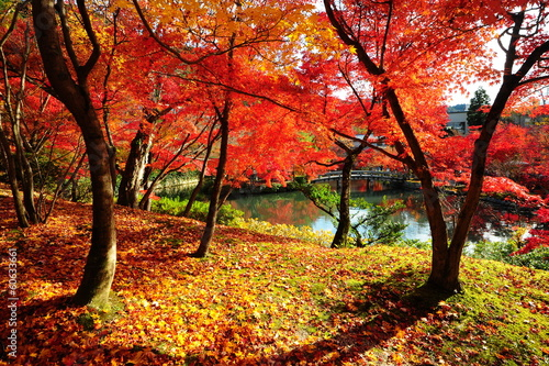 Photo  Japanese maple during autumn at Eikando Temple in Kyoto, Japan.