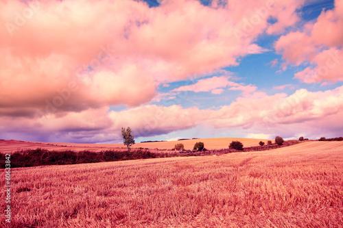 Poster Corail Dreamy fields of wheat