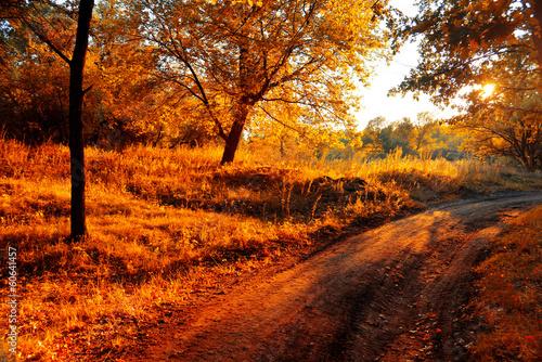 Photo sur Aluminium Automne Autumn