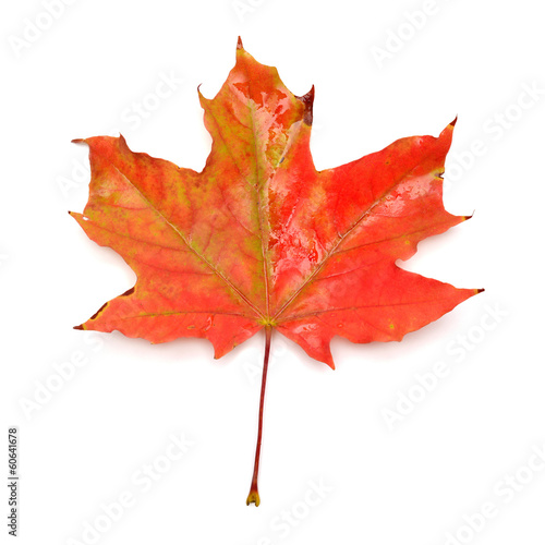 Foto op Canvas Canada Red leaf