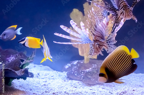 obraz PCV Tropical Fish