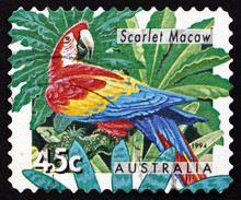Postage Stamp Australia 1994 Scarlet Macaw, Parrot