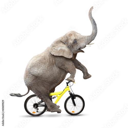 Foto op Aluminium Olifant Happy elephant riding a bike.