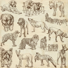DOGS (Canidae) - (no.1) - Hand...