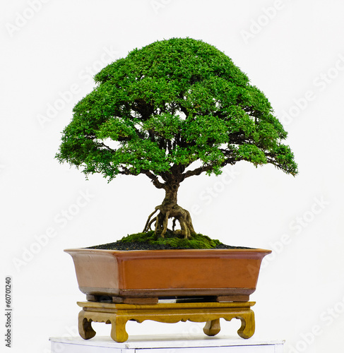 Fotobehang Bonsai Bonsai tree