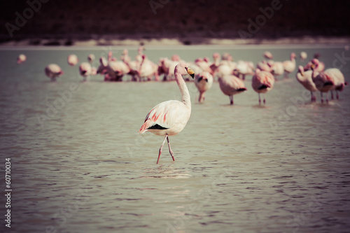 Foto op Aluminium Flamingo Flamingos on lake in Andes, the southern part of Bolivia