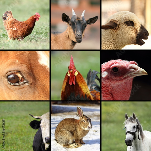 collection of images with farm animals - 60726214