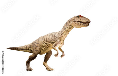 Photo  Restoration of an Allosaurus dinosaur isolated.