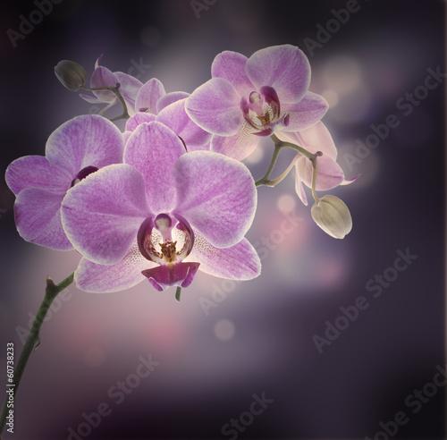 kwiecisty-tlo-tropikalne-orchidee