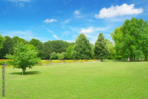 Fotografía  Beautiful meadow in the park