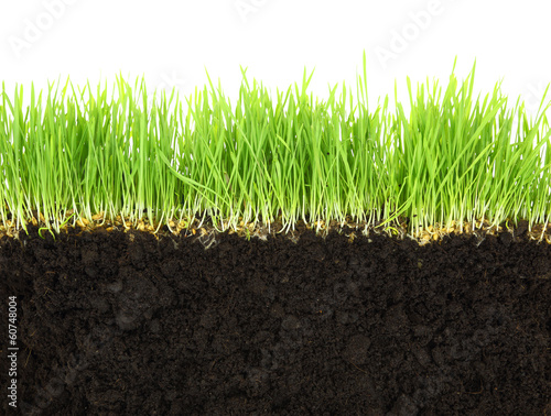 фотография  Cross-section of soil and grass isolated on white background