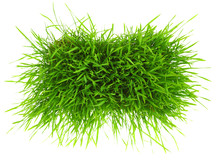 Patch Of Green Grass Isolated ...