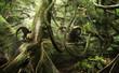 canvas print picture - Das Leben im Regenwald