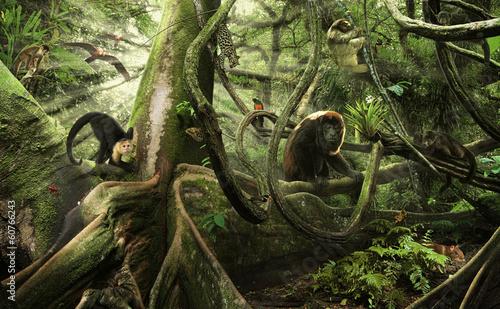 zycie-w-lesie-deszczowym