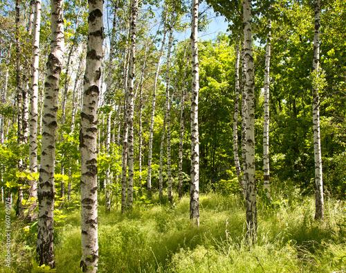Fotografie, Obraz  Spring forest