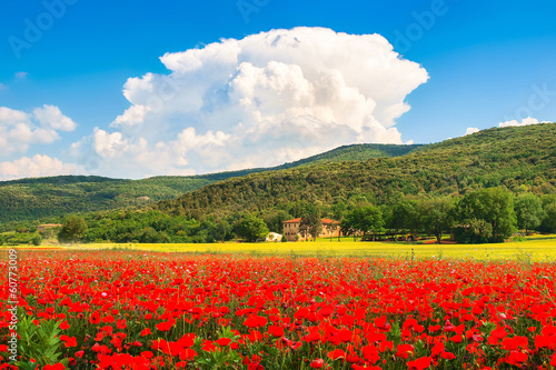 Tuscany landscape with field of flowers, Monteriggioni, Italy