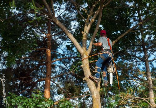 Fotografía  An Arborist Cutting Down a Maple Tree Piece by Piece