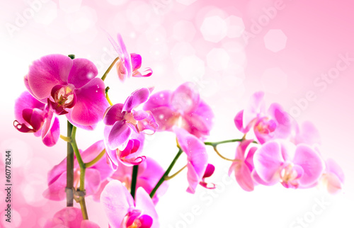 Beautiful flower Orchid