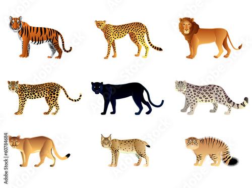 Fototapeta premium Zestaw wektor duże koty