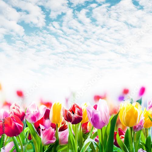 Foto op Plexiglas Tulp Field of colourful tulips under a beautiful sky