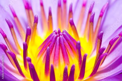 zblizenie-lotosowy-kwiat-w-ogrodzie