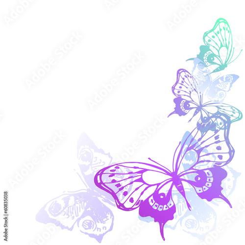 projekt-motyli