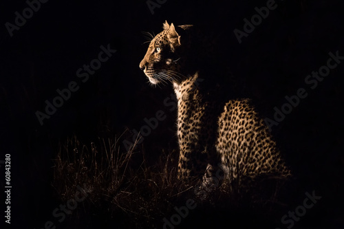 Papiers peints Leopard Leopard sitting in darkness hunting prey
