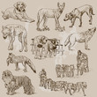 DOGS (Canidae) around the World (set no.1)