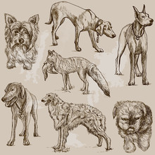 DOGS (Canidae) Around The Worl...