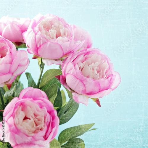 kwiaty-piwonii