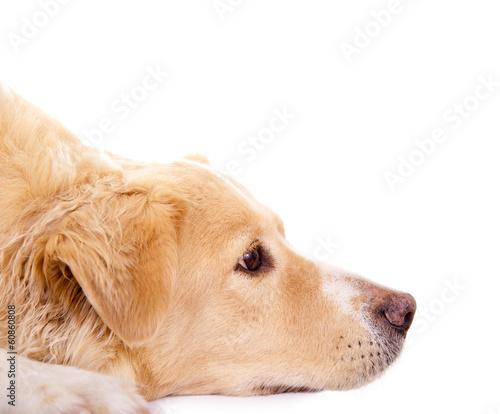 Spoed Foto op Canvas Hond Hundekopf im Profil