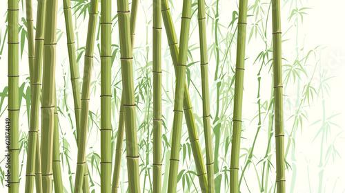 Horizontal illustration with many bamboos.