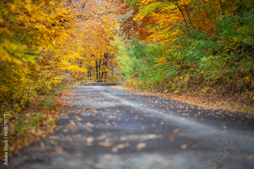 Foto op Canvas Diepbruine Autumn colorful trees near the road