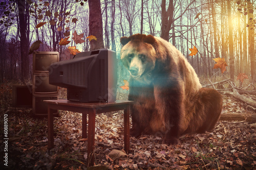 Fotografia  Lonely Bear Watching Television in Woods