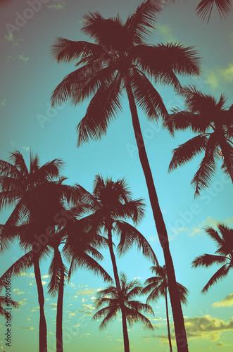 tropikalne-palmy