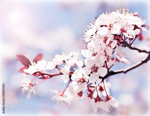 Nowoczesny obraz na płótnie Blooming tree at spring