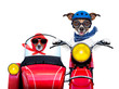 motorbike dogs