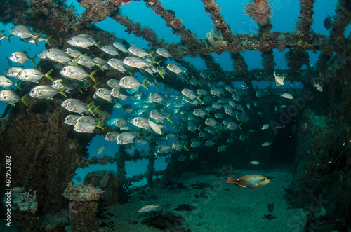 Photo sur Aluminium Naufrage shipwreck, caribbean sea