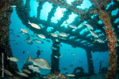 Poster Naufrage shipwreck, caribbean sea