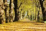 Słoneczna jesień w parku
