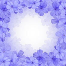Border Or Background With Blue Plumbago Flower