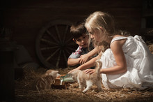 Boy And Girl Young Kittens Fed Milk In A Rustic Barn