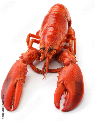 Poster Coquillage boiled lobster isolated on white background