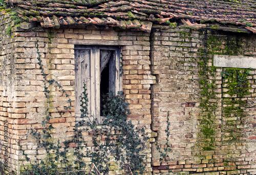 Fotografering  vecchio stabile assalito dalla vegetazione