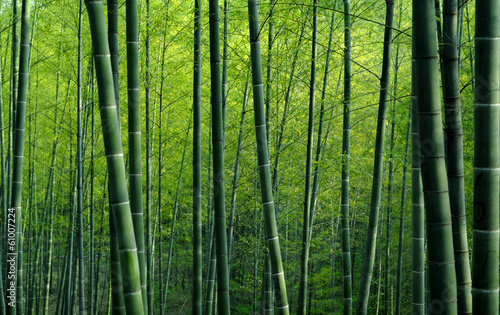 Cadres-photo bureau Bambou Bamboo Forest